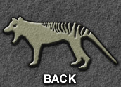 back to: Prehistoric Range of the Thylacine (page 2)